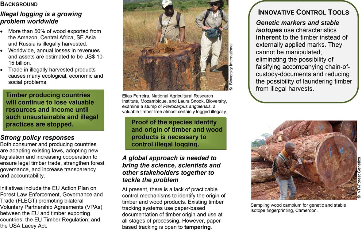 research paper in illegal logging Research anti-corruption please provide us with literature on the linkages between illegal logging and conflict linkages between illegal logging and.