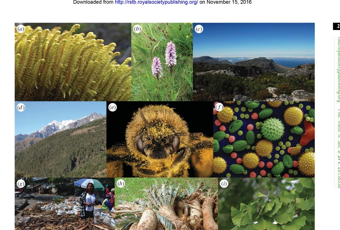 Papers 027 Tellingplantspeciesapartwithdna Global Timber