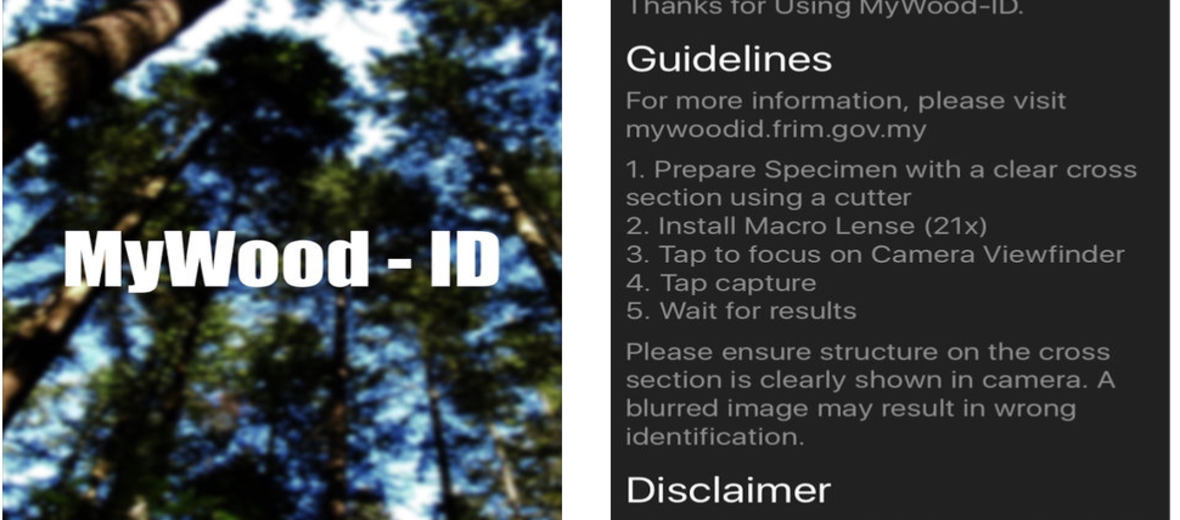 Wood Identification via the App Store | Global Timber Tracking Network